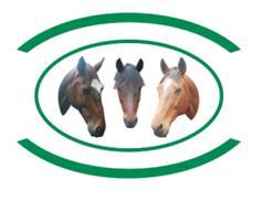 paarden sharon lisser